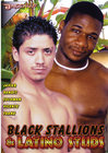 Black Stallions And Latino Studs Sex Toy Product