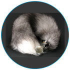 Crystal Minx Tail Silver Fox Plug